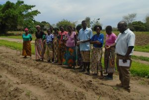 Development Desk of Karonga Diocese Promoting Climate Smart Agriculture