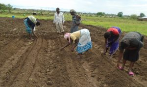 Picture of Farmers preparing a plot for planting soya beans 1