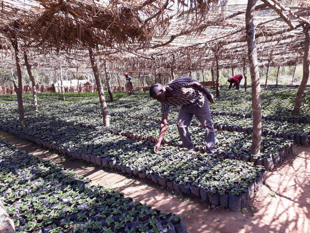 Nursery at Chipunga Farm Limited