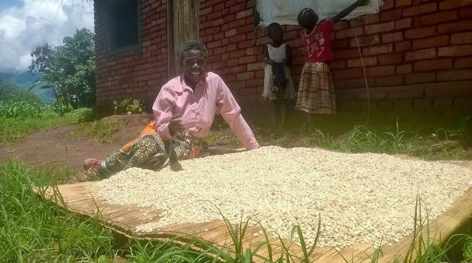 Lucient Gondwe dries maize harvested from her irrigation field