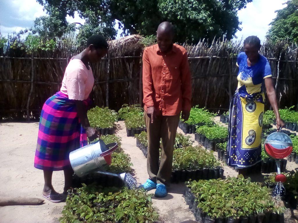 Picture of Members watering a nursery in Lupembe 2