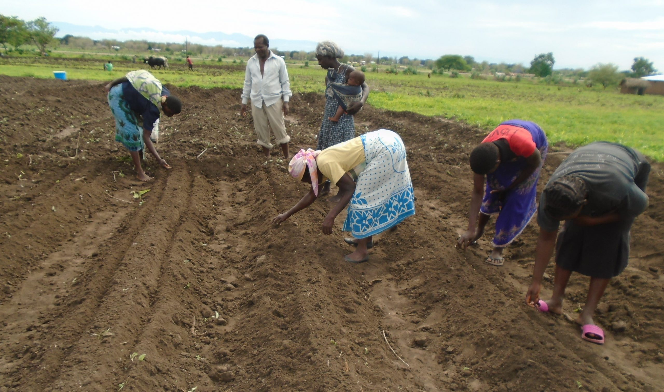 Development Desk Using Demonstration Plots to Scale up Adoption of Climate Smart Agricultural Technologies