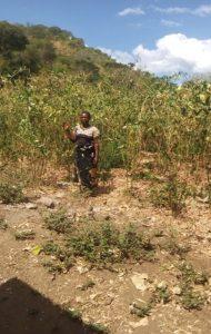 Edna Chihana standing in her pigeon peas garden