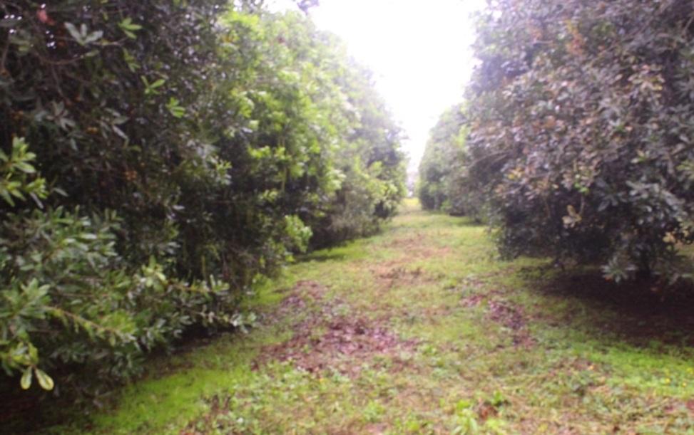 An established macadamia nuts plantation at Chipunga Farm