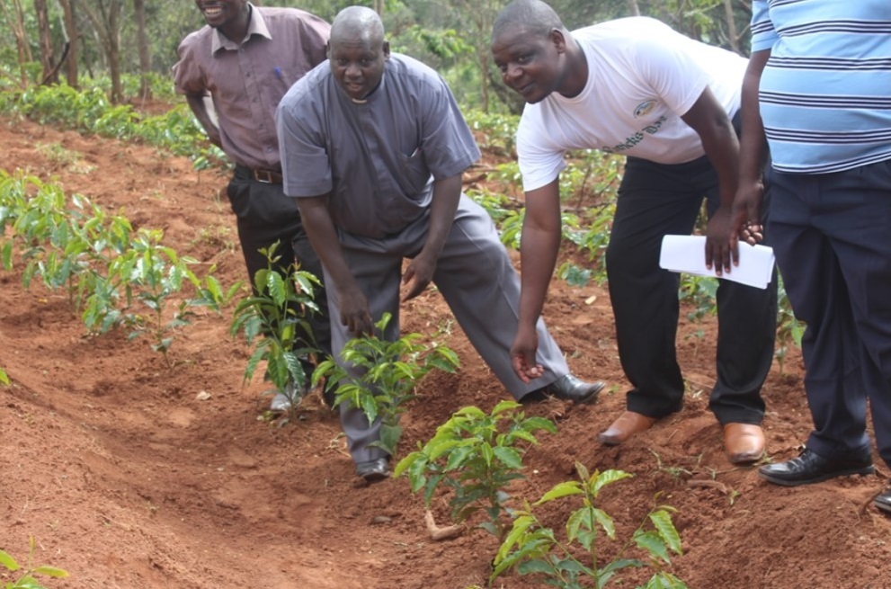 Fr Bundi and Stephano appreciating the newly planted coffee bushes at Chipunga Farm