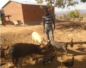 Jimu Msukwa with his pigs purchased using money from his carpentry skills. Behind him is his mother's house which he has helped to construct