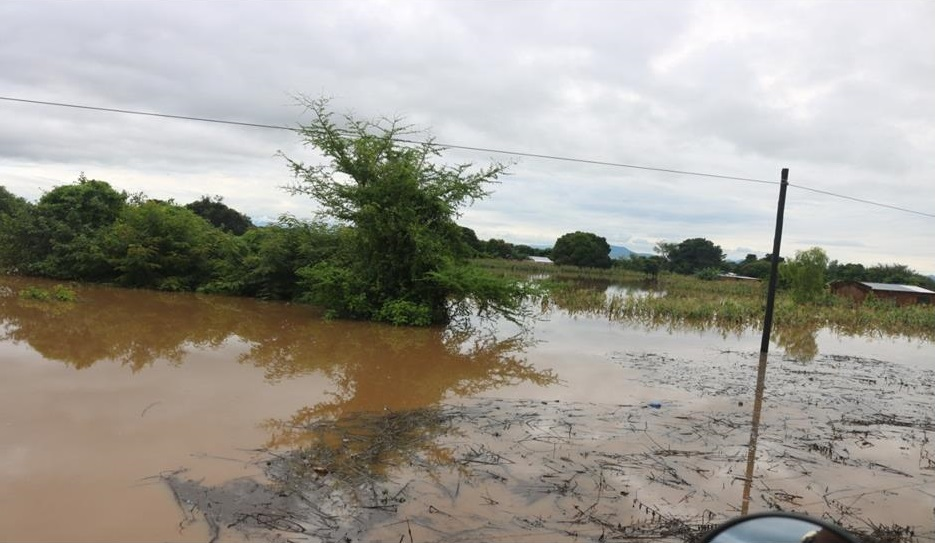 Flooded maize field
