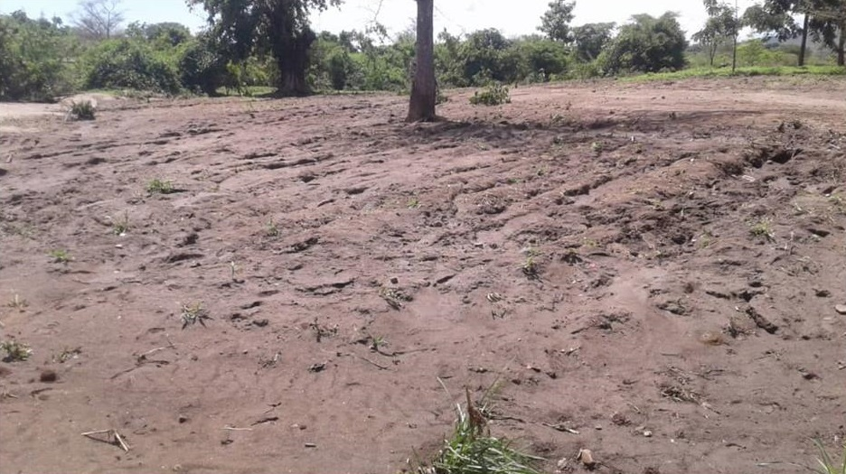 Maize field washed away